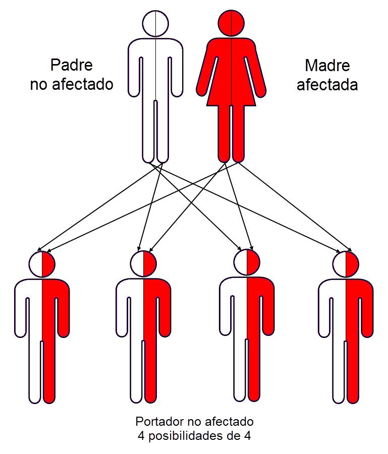 herencia Fiebre Mediterránea Familiar